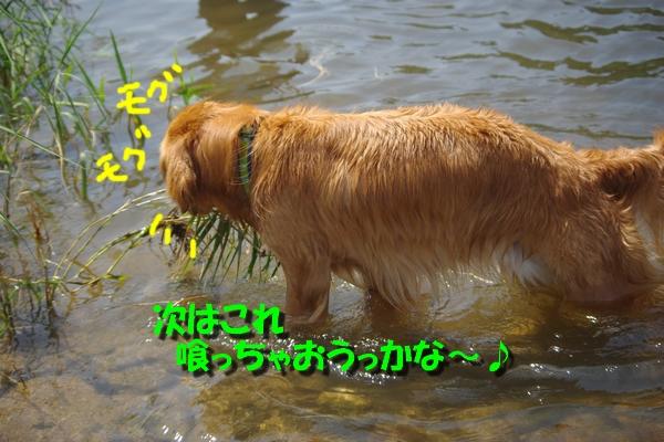 IMGP8809.jpg