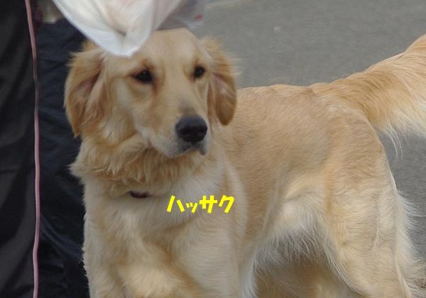 IMGP9093_20110301233647.jpg
