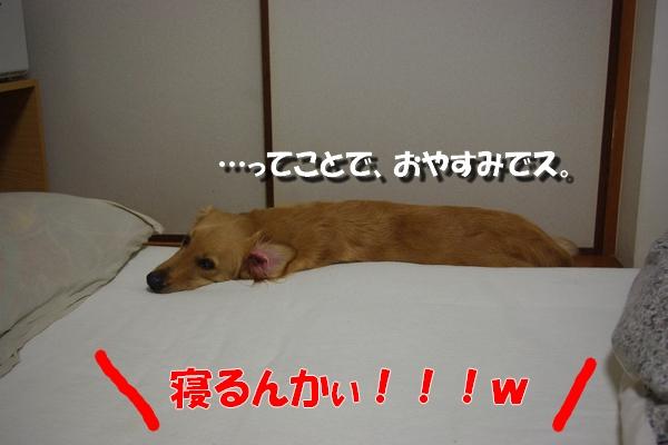 IMGP9276.jpg