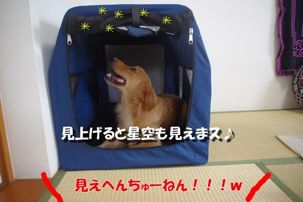 IMGP9333.jpg