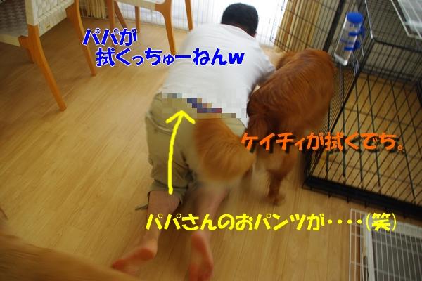 IMGP9488_20100815225635.jpg
