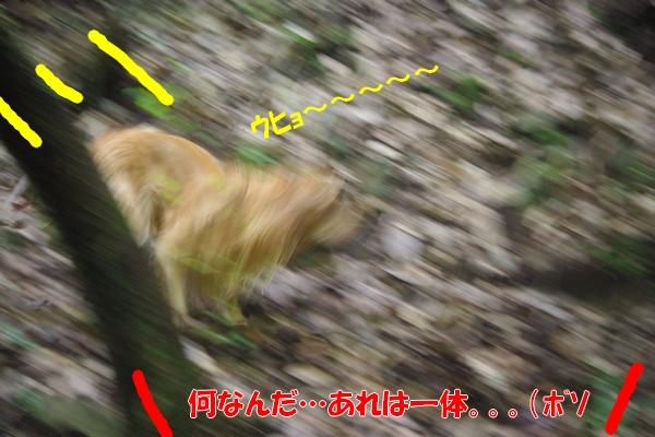 IMGP9643.jpg