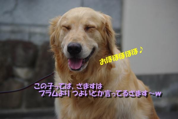 IMGP9684_20100818162600.jpg