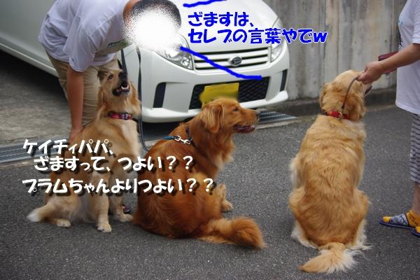IMGP9688_20100818162645.jpg