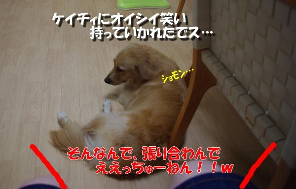 IMGP9733.jpg
