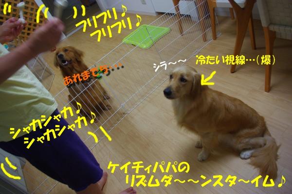 IMGP9762_20100819231110.jpg