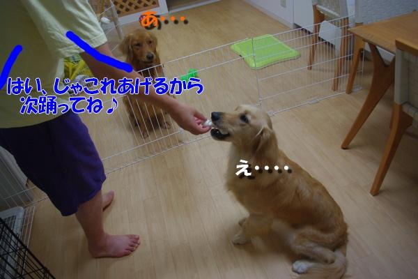 IMGP9765_20100819231109.jpg