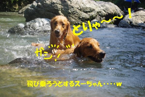 IMGP9892_20100823233022.jpg