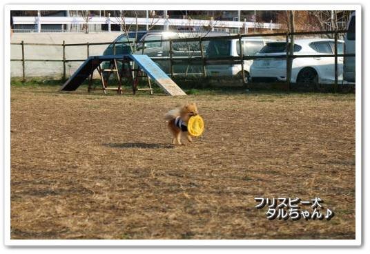 20140112run-16.jpg