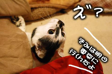 え~っとうきょ?
