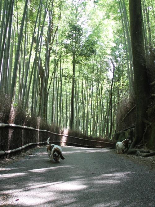嵐山00010