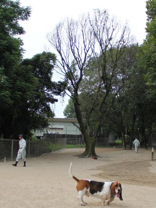 大高緑地09
