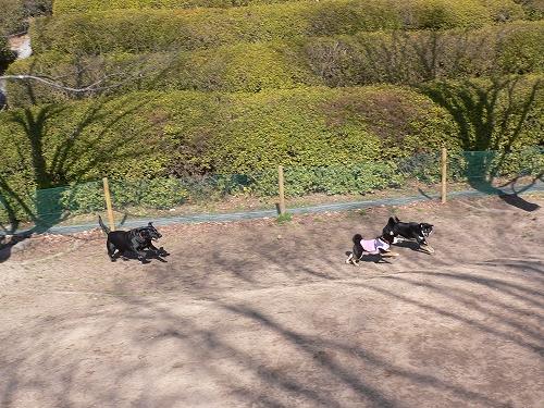 11.02.26 竜王公園 3