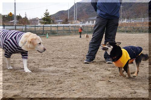 11.03.04 ドッグランクラブ広島 03
