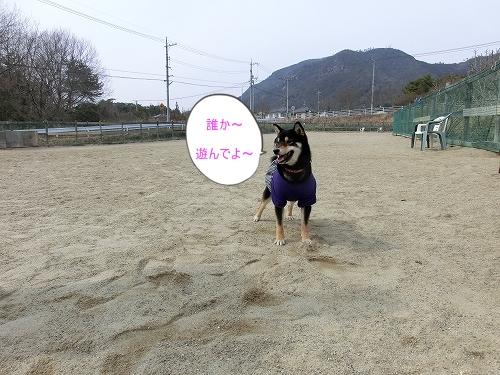 11.03.12 ドッグランクラブ広島 001