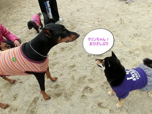 11.03.12 ドッグランクラブ広島 09