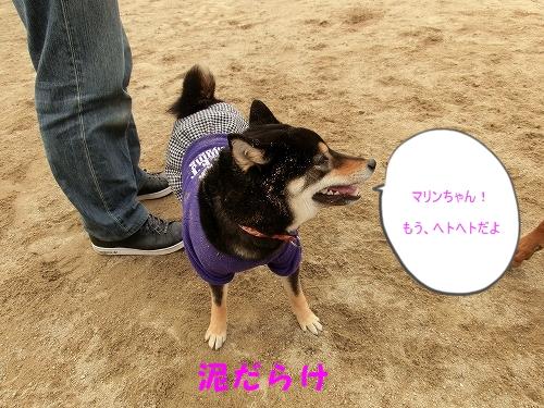 11.03.12 ドッグランクラブ広島 17