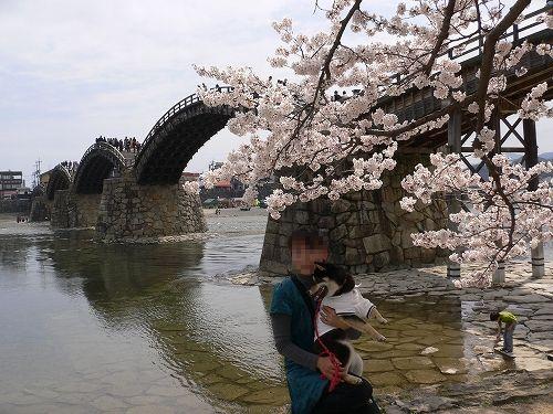 10.04.05  岩国・錦帯橋2