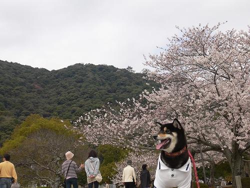 10.04.05  岩国・錦帯橋3
