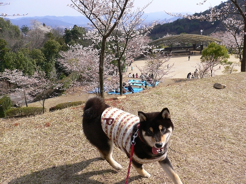 10.04.04 東広島・憩いの森公園