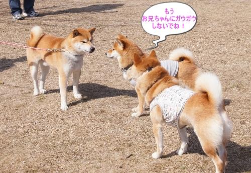 11.03.26 七塚原SA 09