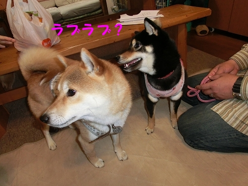 11.03.26 りゅうくん&ひなちゃん家2