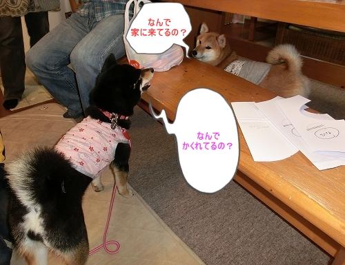 11.03.26 りゅうくん&ひなちゃん家1