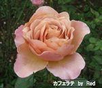 秋の花見5