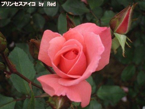 秋の花見3