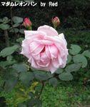 秋の花見11