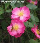 秋の花見8