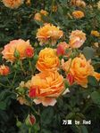 秋の花見7