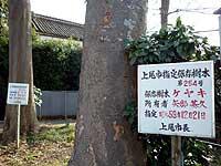 矢部家の指定保存樹木