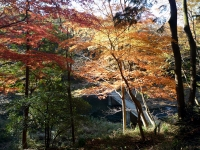 紅葉と冠水橋