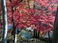 紅葉と槻川