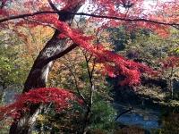 紅葉と槻川-02