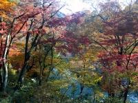 紅葉と槻川-03