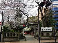 011hikawakuwa007.jpg