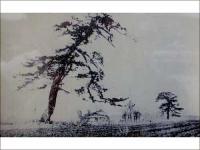 「鶴亀松」の写真