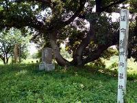 谷中村遺跡 共同墓地跡