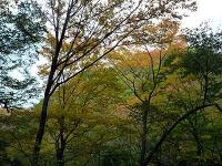 銅山林道紅葉
