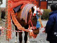 栃木県小山市「篠塚稲荷神社の流鏑馬」