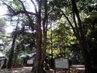 氷川女体神社社叢