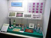 さいたま市立浦和博物館展示