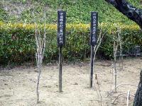 「中国楊貴妃の墓所の牡丹」と「中国太原市双塔寺の牡丹」