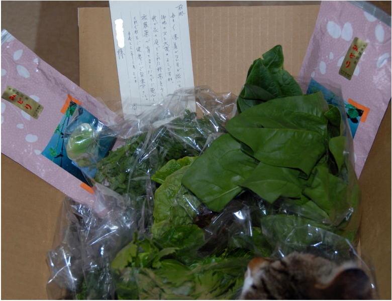 02葉物野菜