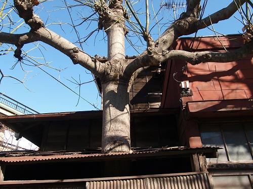 屋根からの木