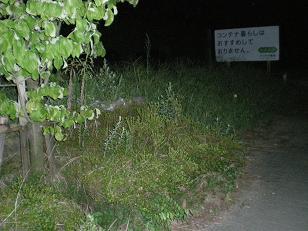 歩道にはみ出ている植栽箇所