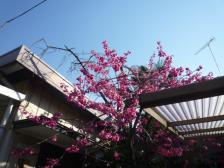 2012春花 桃