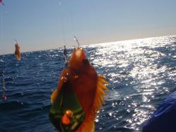 コピー ~ 2011,11 紅葉とシーバス釣行 077